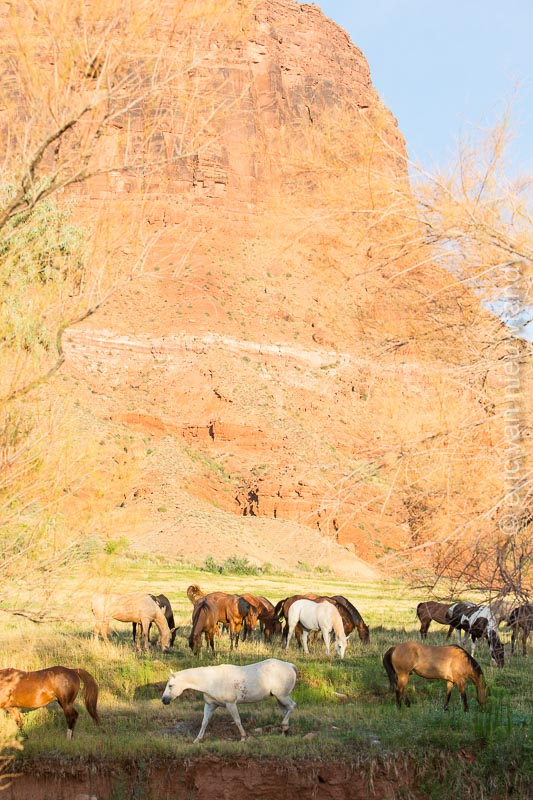 horses at red cliff lodge